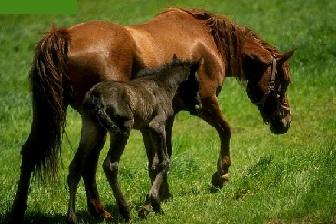 دانلود تحقیق در مورد اسبها