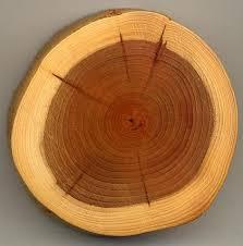 پاورپوینت مواد و مصالح ساختمانی - چوب (تنها مصالح تجدید پذیر)